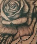 bambi_tattoo_80_tattoo-on-move_roses_black-and-white_ornemental