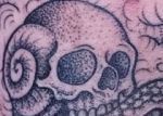 bambi_tattoo_72_tattoo-on-move_skull_crane_escargot_snail